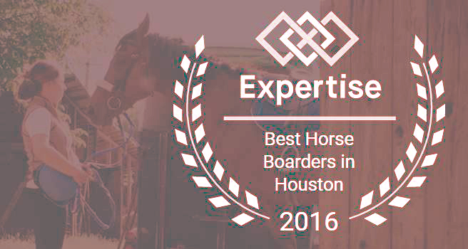 Best Horse Boarders in Houston, TX