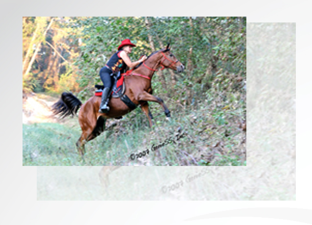 Cypress Trails Ranch - Adventure Trail Rides