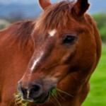 Cypress Trails Ranch Horse Boarding
