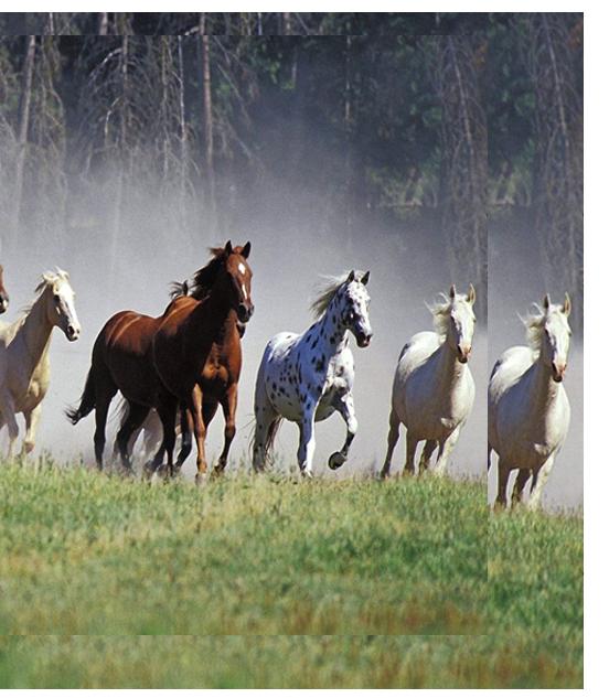 Cypress Trails Ranch - Horse Boarding
